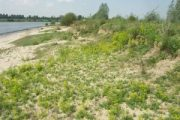 Natuurlijke oevers en steilwanden langs de Maas (PNOM-project)