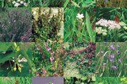 Flora van het Maasdal