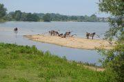 Vier nieuwe gebiedsrapportages langs de Brabantse Maas